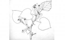 dessins-20-912x570